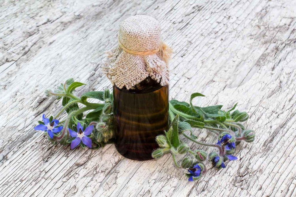 Borage (Borago officinalis) and borage oil