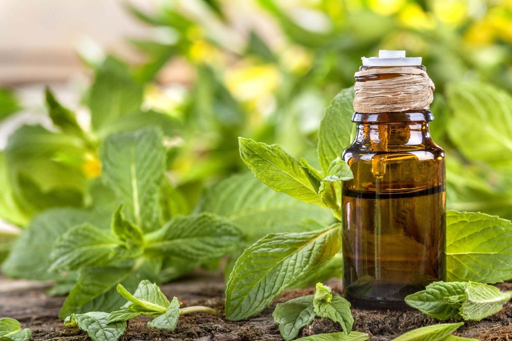 Essential oil made from mint on a rustic table